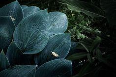 © bysahlia.com Gmunden Austria, Plant Leaves, Garden, Plants, Garten, Lawn And Garden, Gardens, Plant, Gardening