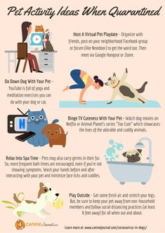Pet activity ideas to keep you (and your pup) entertained while at home! What are your tips? Nutrition Guide, Diet And Nutrition, Meditation Exercises, Virtual Pet, Google Hangouts, Guide Dog, Word Out, Activity Ideas, Homemade Dog