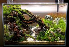 Is a larger plant tank always better because it is more stable? Aquarium Garden, Live Aquarium Plants, Aquarium Fish Tank, Planted Aquarium, Planted Betta Tank, Betta Fish Tank, Aquascaping, Fish Tank Themes, Fish Tank Terrarium