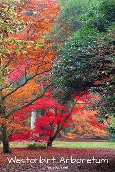 Westonbirt Arboretum. The perfect place to see autumn colour at its best. Read the full post here: http://www.rustyduck.net/2012/10/24/colours/
