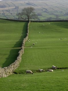 Yorkshire Dales......♔..                                                                                                                                                      More