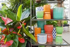 Pick up a little piece of paradise. Indoor Gardening, Indoor Plants, Garden Spaces, Planter Pots, Paradise, Home And Garden, Create, Inside Plants, Heaven