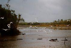 Suriname © Pascal Hermans