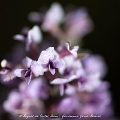 Lilac, Game, Flowers, Plants, Beautiful, Syringa Vulgaris, Gaming, Plant, Toy