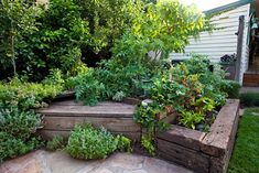 Horticulturist Hendrik Van Leeuwen's garden is a shining example of a productive urban garden and shows how we could make better use of our backyards.