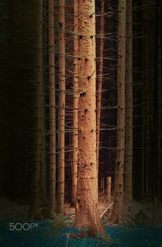 Tree - Nature Impression