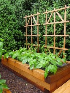 Microfarm Organic Gardens Blog -Jo loves Gardens & Vintage Dooney Bourke! www.AdorePurses.com www.VintageDooney.com