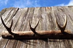 Rustic Coat Rack With Deer Antlers Rustic Decor, Hat Rack, Cabin Decor, Coat…