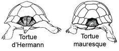 tortues_comparaison-1.jpg
