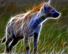 fractal hyena by RayMorris1, via Flickr