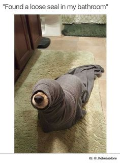 Found a loose seal in my bathroom (Funny Animal Pictures) - #bathroom #dog #seal