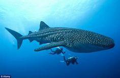 oceanconservancy.org