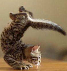 Purrrfect Handstand, Kitten