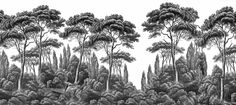 Panoramic wallpaper Ananbô Pines and Cypress black and white - pattern Zuber Wallpaper, Interior Wallpaper, Cool Wallpaper, Landscape Art, Landscape Paintings, Tropical Wallpaper, Still Life Drawing, Stunning Wallpapers, Beautiful Wall
