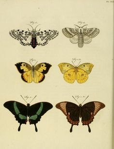 Anatomy of the Victorian Antique Prints, Vintage Prints, Butterfly Body Parts, Butterfly Metamorphosis, Merian, John James Audubon, Insect Art, Butterfly Painting, Anatomy Art