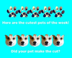Here are the cutest pets of the week, as voted by BuzzFeed users!
