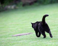 günstige Tierhalterhaftplichtversicherung für Katzen