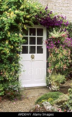 Cottage Front Door honeysuckle clematis containers lonicera climbers climbing plants flowers garden aromatic