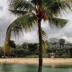 Coconuts!!!!!!! Yummy!!! | Flickr – Condivisione di foto!