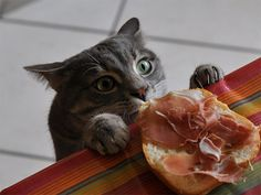 Cats are good thieves  http://fineshark.com/cats-good-thieves/