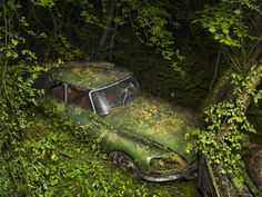 Abandoned cars in nature by Peter Lippmann