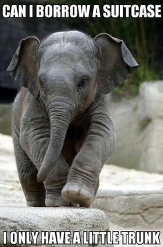 Animal Jokes Are So Bad They're GOOD…I'm Cracking Up! A Jason le encanta elefantes.A Jason le encanta elefantes. Cute Baby Elephant, Little Elephant, Cute Baby Animals, Funny Animals, Baby Elephants, Funny Elephant, Elephant Elephant, Asian Elephant, Elephants Photos