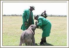 kamok elephant - Buscar con Google