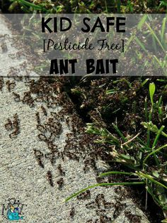 A few weeks ago, I took my toddler outside to play in the back yard. As I was setting up his little pool I noticed a nasty, disgusting swarm of ants making their nasty little home on my back...