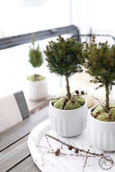 "syflove: ""topiary """
