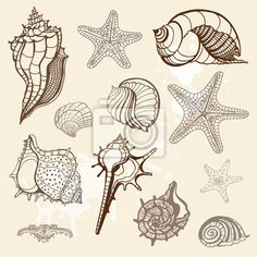 Find Grange Sea Shells Collection Handdrawn Vector stock images in HD and millions of other royalty-free stock photos, illustrations and vectors in the Shutterstock collection. Shell Drawing, Sea Plants, Shell Collection, Illustration Art, Illustrations, Free Art Prints, Plant Drawing, Stock Foto, Doodle Art