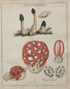 Das System der Pilze und Schwämme, 1817 p by peacay, via Flickr