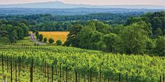 Raffaldini Vineyard Yadkin Valley,NC