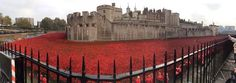 Tower of London - Blood Swept Lands and Seas of Red Remembrance Day Poppy, Lest We Forget, Tower Of London, Poppies, Seas, Blood, Poppy, Poppy Flowers