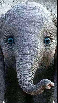 Cute Funny Animals, Cute Baby Animals, Animals And Pets, Elephant Artwork, Elephant Love, Beautiful Creatures, Animals Beautiful, Animal Original, Elephants Photos