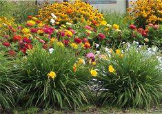 drought tolerant plant landscape | drought resistant plants for your landscaping project | Landscape ...