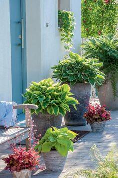 An den Vorgarten knüpfen sich viele Wünsche: Er soll einladend wirken, rund ums Jahr schön aussehen, pflegeleicht und unverwechselbar sein. Außerdem dient er als Zugang zum Haus und soll ein Versteck für Mülltonnen oder einen Abstellplatz für Fahrräder bieten.