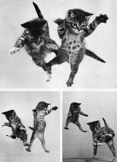 More dancing kitties!