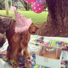 La celebración del cumpleaños de Fiona en el parque con sus amigos de 4 patas…