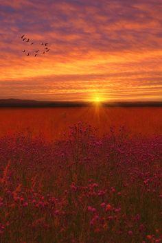 ✯ Scarlet Fields