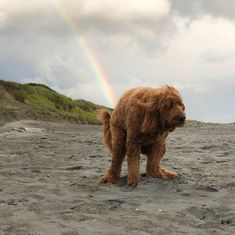 Unicorns Aren't The Only Things That Poop Rainbows… | Bored Panda