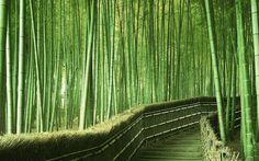 A walk through a bamboo forest - nature can be so beautiful. Great scene for the lovers of the colour green (like me!). So soothing.