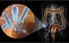 Disenteria – o que é, Causas, Sintomas e Tratamento
