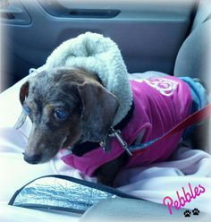 Off to the vet...not happy, but sporting more Pink.