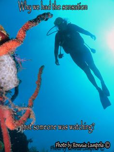 Some scuba diving quotes for you to share. On the left side of the screen you will see the icons for sharing. Breathing Underwater, Underwater World, Scuba Diving Quotes, Ocean Quotes, Great Fear, Watch Photo, Open Water, Aerobics, Be Yourself Quotes