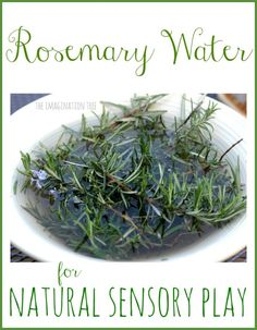 Rosemary water for sensory play. Let rosemary soak in water overnight then have children explore during water play. Nice strong smell.