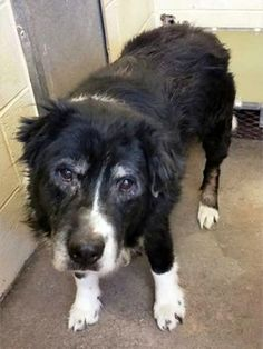 Savuer, dumped after 10 years at Atlanta area shelter