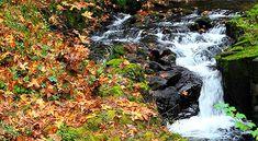 lori-rocks:  cold autumn stream,