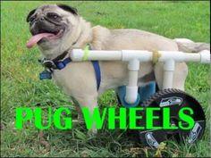 DIY French Bulldog PVC Dog Wheelchair - YouTube