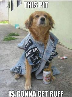 From the 70000TONS OF METAL Official Forums. Heavy Metal Pet Memes.