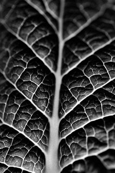 """Leaf veins and texture"" by Martyn Franklin -- a beautiful capture of the texture and detail. Veieu el disseny fractal?"